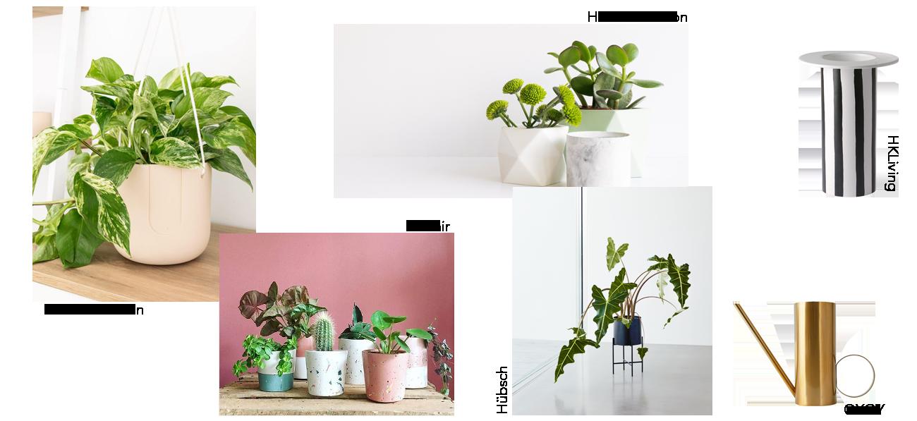 idées cadeaux plantes